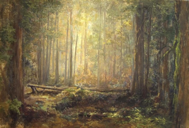 cascadeforestaccess-1